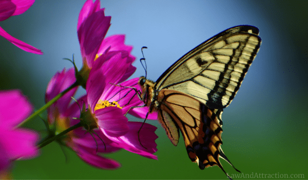 People are in need of butterflies