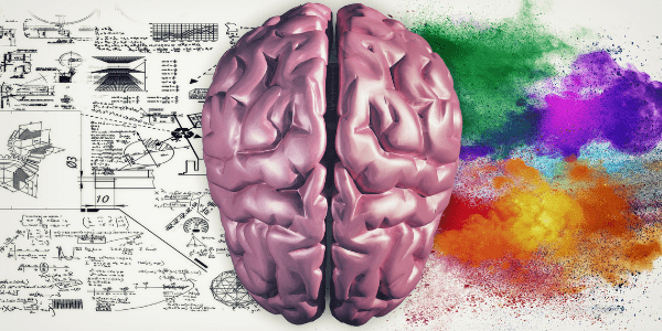 Right And Left Hemispheres Of The Brain